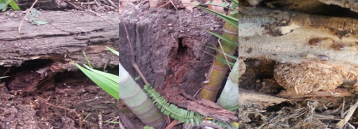 Damp conditions and direct sunlight make timber retaining walls perfect for Termites